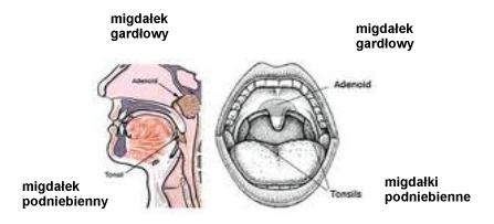 adenotomia-img-1